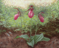 The Three Graces - Lady Slipper